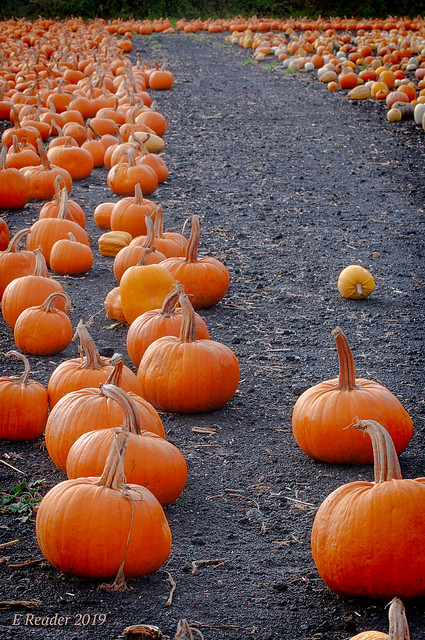 Road to Pumpkinville