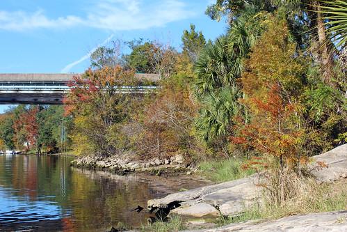 landscape bridge autumn trees fall river florida fallcolors brush fanningsprings