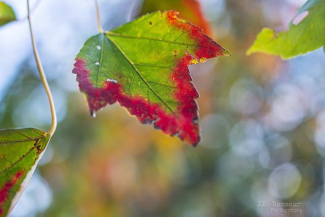 Autumn Slowly Takes Over