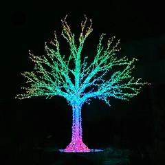 Funkelbaum im Funkelland