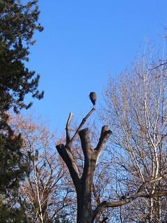 November heron