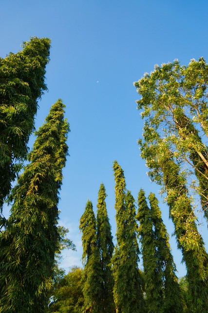 Trees at River Kwai Park & Resort in Kanchanaburi, Thailand