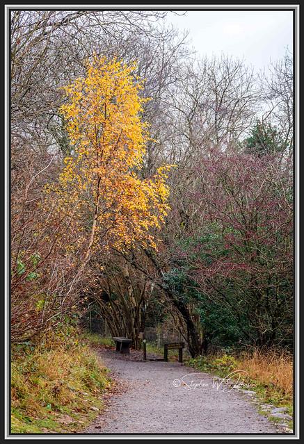 SJ2_3184 - Aysgarth trees