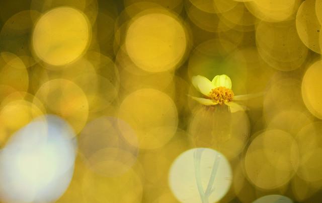 yellow-.jpg-1.psd re in a yellow tone