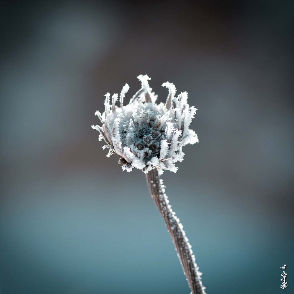 Ice flover ...