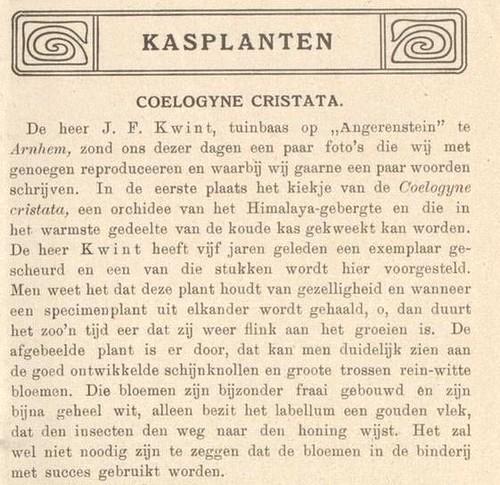 Coelogyne cristata, gekweekt in Angerenstein