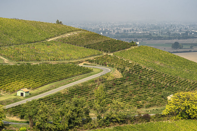 Vineyards of Oltrepo Pavese, Italy, at fall
