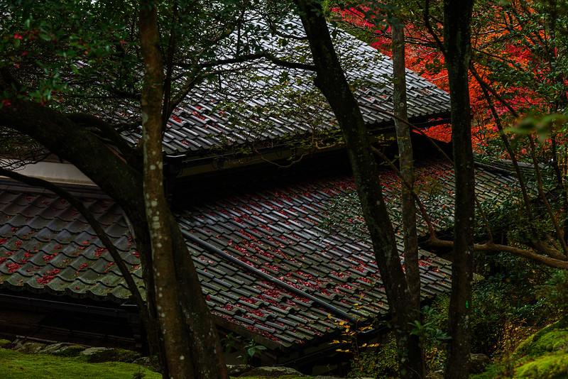 Fallen Leaves / Saimyoji Temple