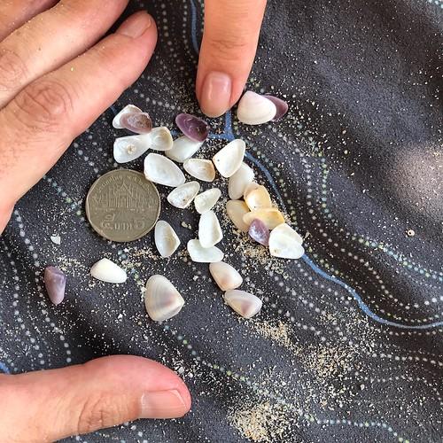 Tiny sea shells, Patong Beach