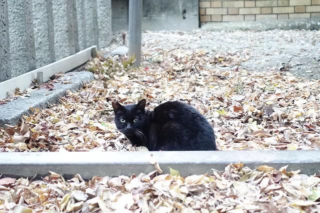 Today's Cat@2019-12-01