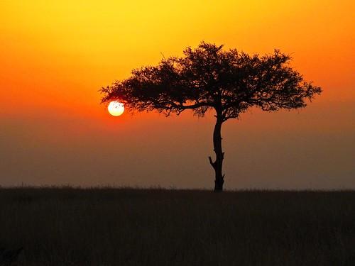 sunset silhouette tree acacia acaciatree grasslands mara masaimara savannah dusk ke africa africansafari p900 coolpixp900 landscape nikoncoolpixp900 jennypansing kenya endofday
