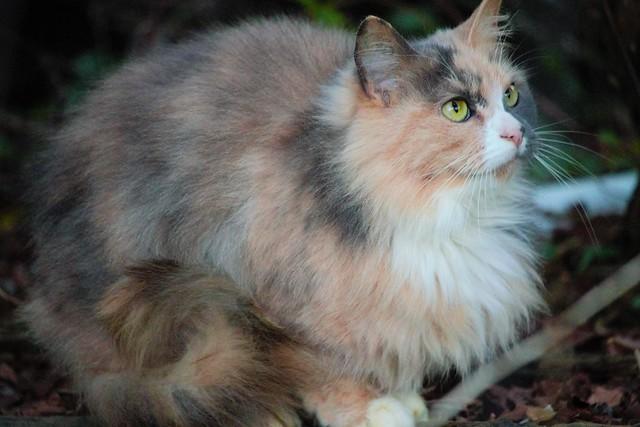 Neighbor kitty