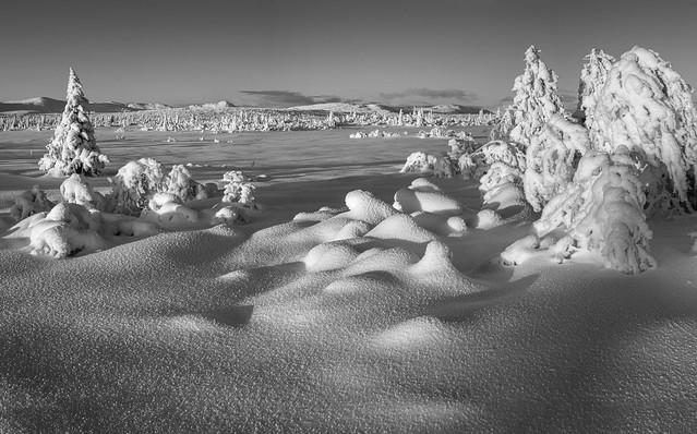 Black and white November
