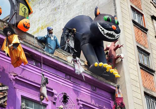 PUEBLA ¡Un gato negro en el techo!