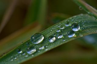 Waterdrops | by pstenzel71