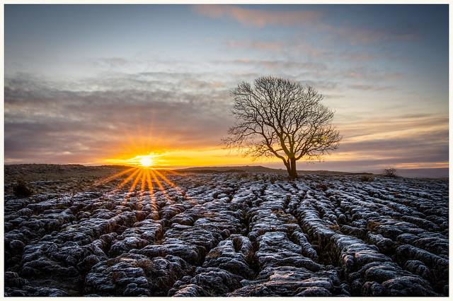 Malham Tree at sunrise