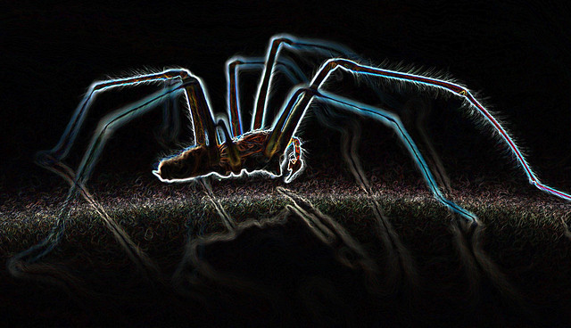 spider from mars