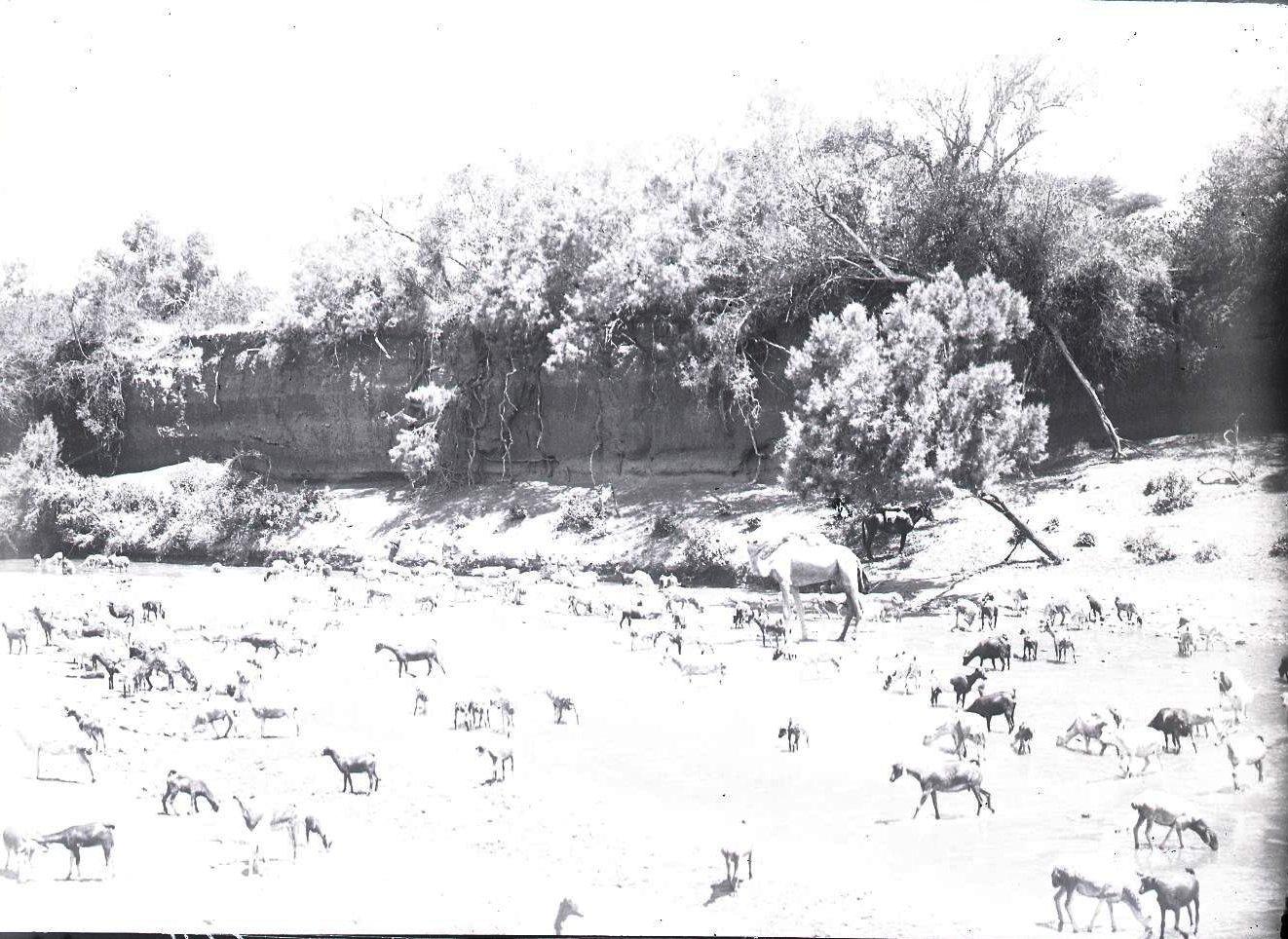 668. Данакильская пустыня. Мулю. Водопой