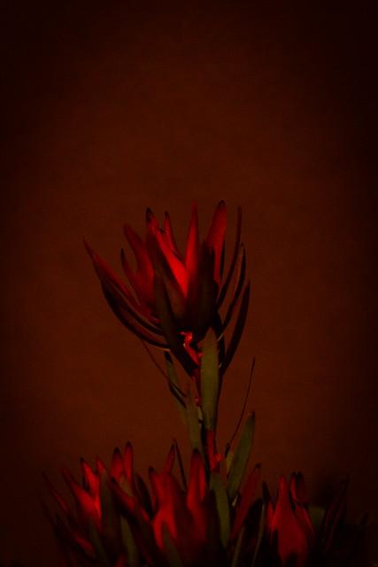 warm glow