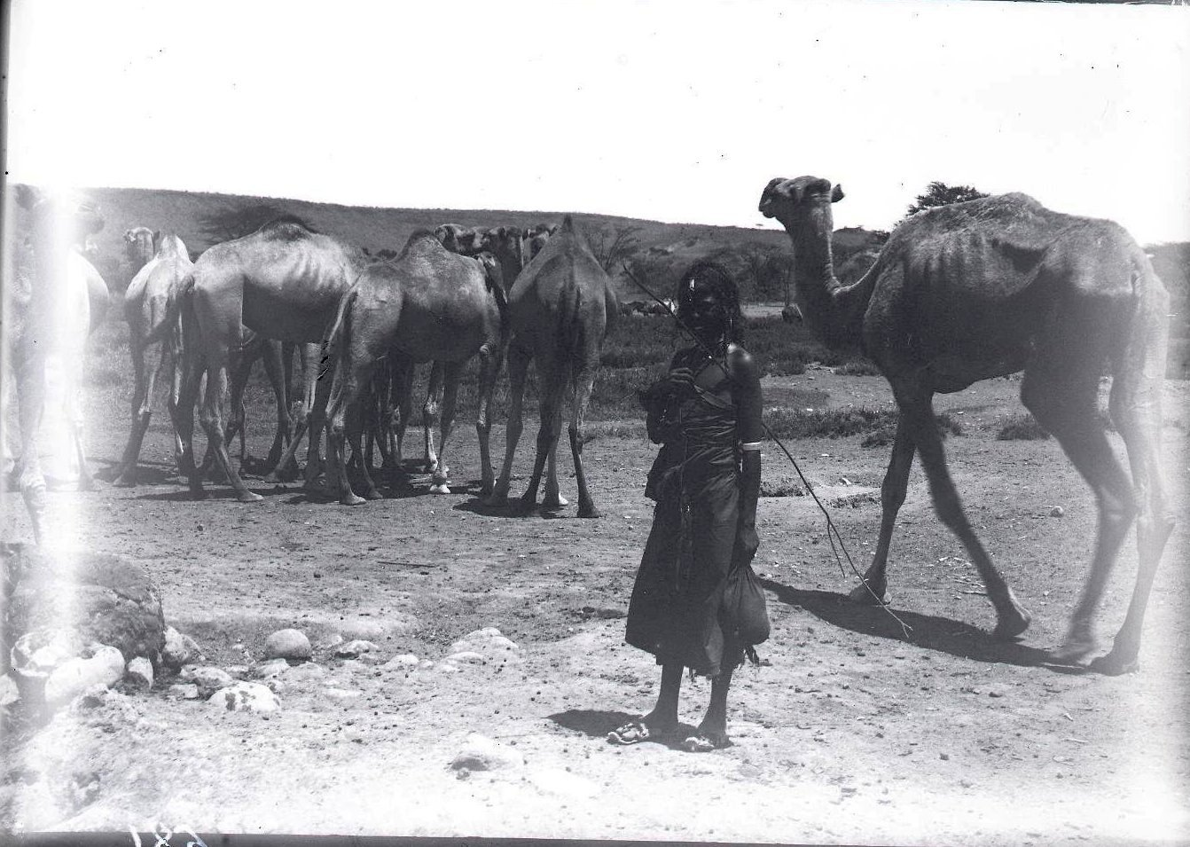 681. 1899. Фале. Верблюды и девочка