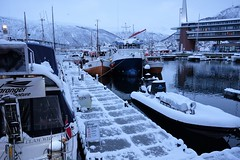 Snow in the harbour