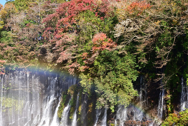 •In Japan, we enjoy viewing colorful autumn leaves.