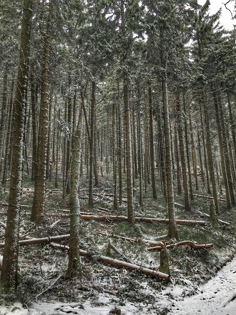 Przyprószony las / Powdered forest