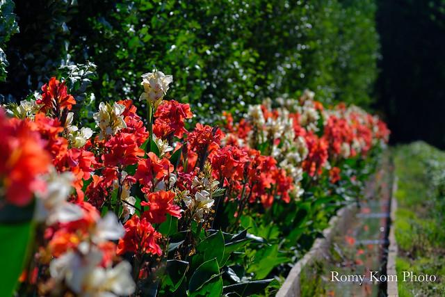 Canal de fleurs