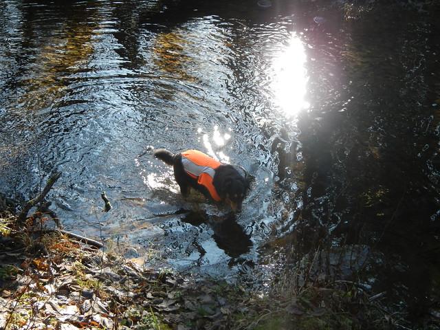 2019-11-29 step creek triple C 021