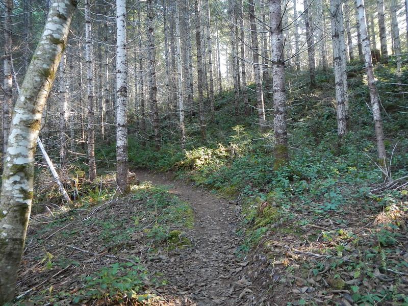 2019-11-29 step creek triple C 008