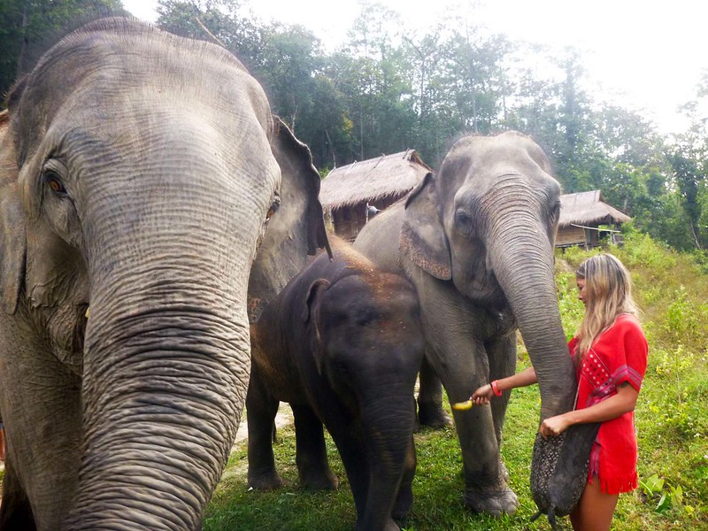 Into The Wild Elephant Camp (Chiang Mai, Thailand) – Brochure, Tour Info, Price & Reviews