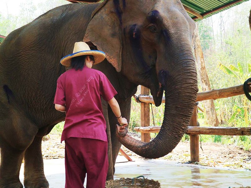 Elephant Rescue Park (Chiang Mai, Thailand) – Brochure, Tour Info, Price & Reviews
