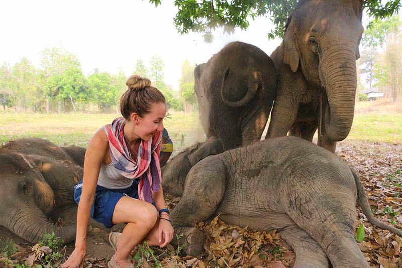 Woody Elephant Home (Chiang Mai, Thailand) – Brochure, Tour Info, Price & Reviews