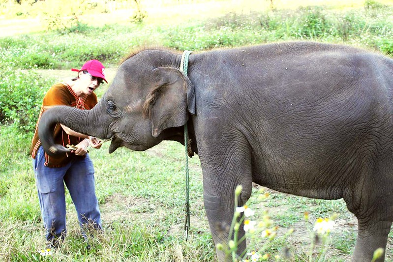 Ran-Tong Save & Rescue Elephant Centre (Chiang Mai, Thailand) – Brochure, Tour Info, Price & Reviews