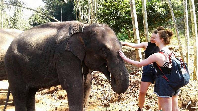 Elephant Explorers (Chiang Mai, Thailand) – Brochure, Tour Info, Price & Reviews