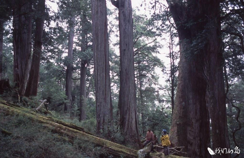 公視記者陳佳利長期關注盜伐議題,她提及2018年製作〈枉死之森〉專題報導時,前往新竹山區一處遭盜伐的香杉林。