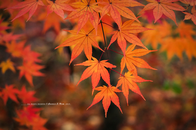 autumn color around lake
