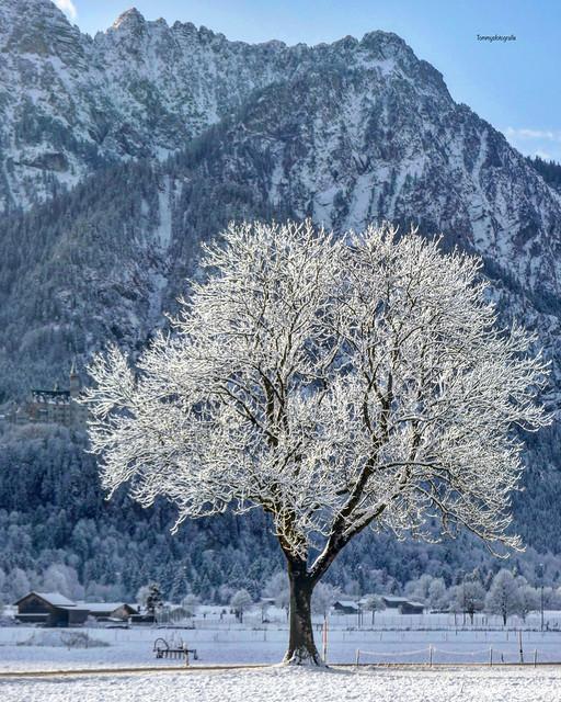 Magic winter tree Picture taken in Schwangau, Bavaria, Germany