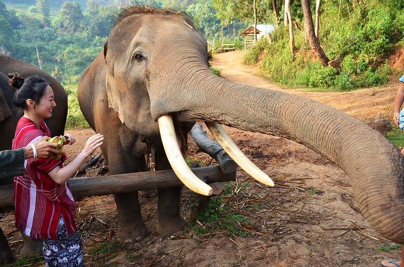 Elephant Dream Valley (Chiang Mai, Thailand) – Brochure, Tour Info, Price & Reviews