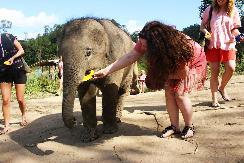 Doi Inthanon Elephant Park (Chiang Mai, Thailand) – Brochure, Tour Info, Price & Reviews