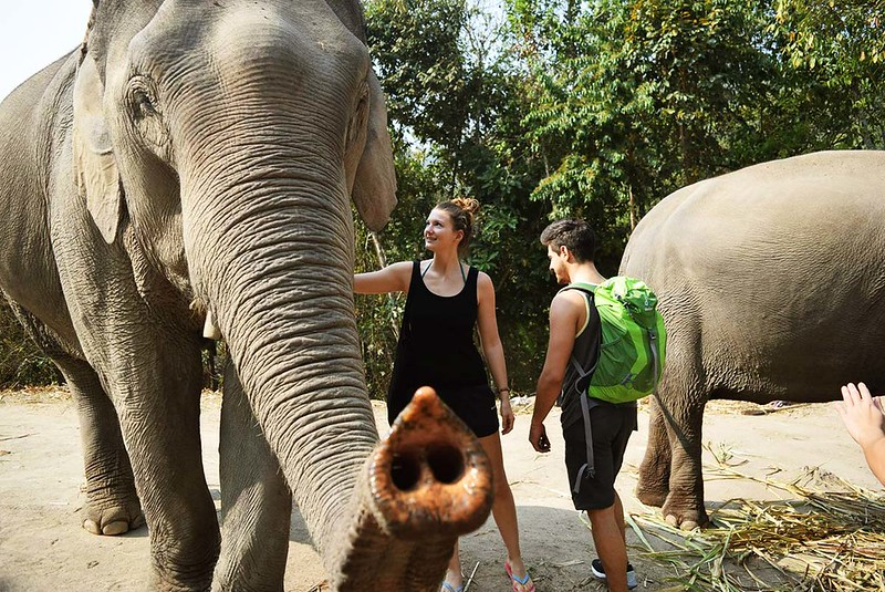 Elephant Discovery Chiang Mai (Chiang Mai, Thailand) – Brochure, Tour Info, Price & Reviews
