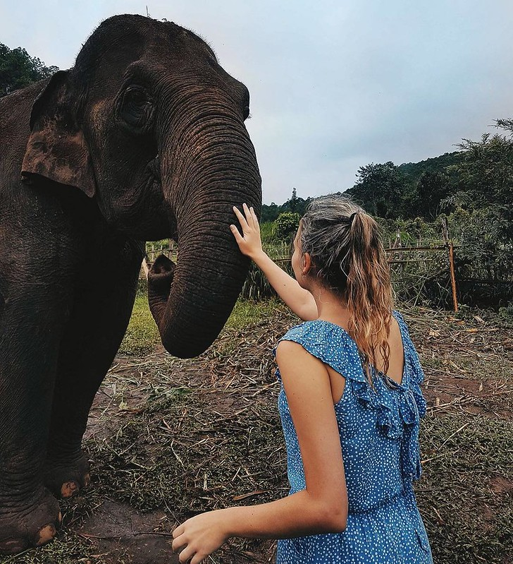 Chiangmai Elephant Land (Chiang Mai, Thailand) – Brochure, Tour Info, Price & Reviews