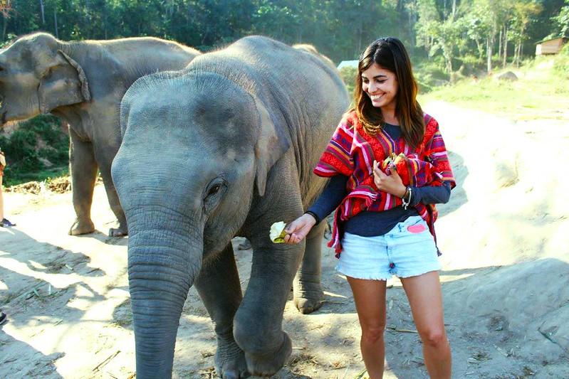 Elephant Jungle Sanctuary (Chiang Mai, Thailand) – Brochure, Tour Info, Price & Reviews