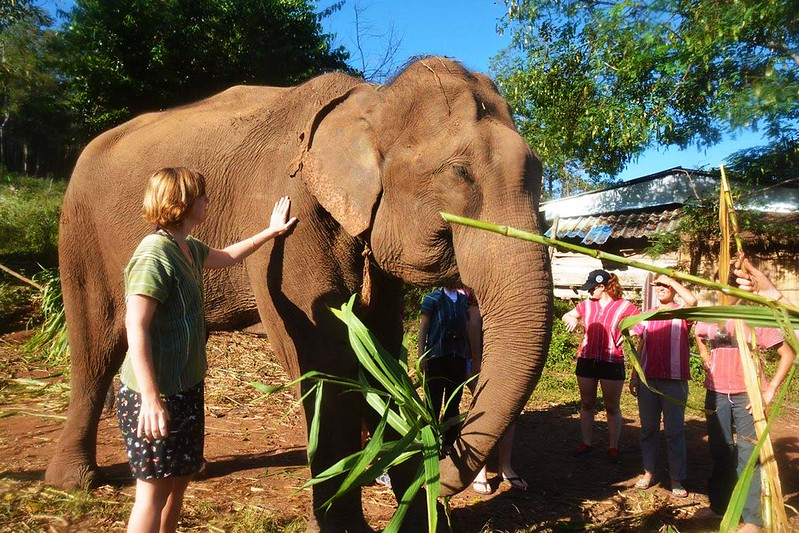 Elephant Jungle Paradise Park (Chiang Mai, Thailand) – Brochure, Tour Info, Price & Reviews