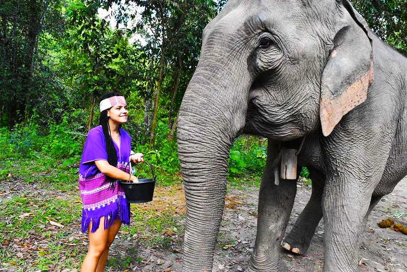 Elephants At Home (Chiang Mai, Thailand) – Brochure, Tour Info, Price & Reviews