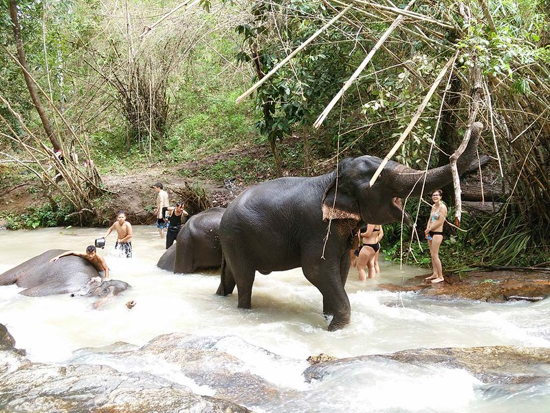 HUG Elephant Sanctuary (Chiang Mai, Thailand) – Brochure, Tour Info, Price & Reviews