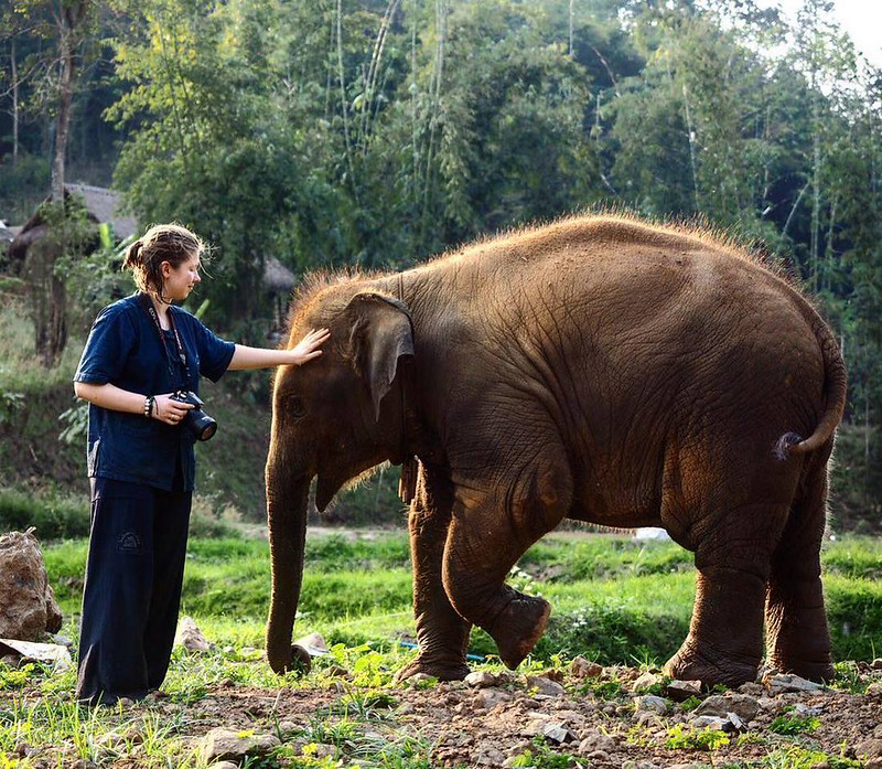 Thai Elephant Home (Chiang Mai, Thailand) – Brochure, Tour Info, Price & Reviews