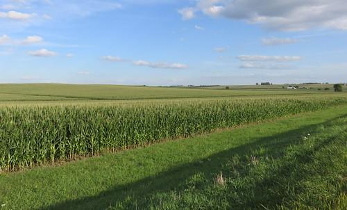landscapes us unitedstates iowa ia northamerica butlercounty corn