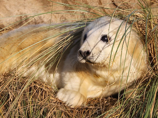 Pup in the sand dune