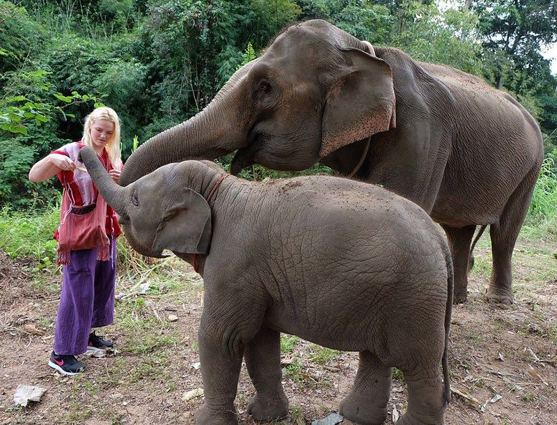 Discovery Elephant Keeper (Chiang Mai, Thailand) – Brochure, Tour Info, Price & Reviews